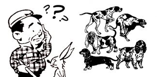 quiz-races-chien-de-chasse